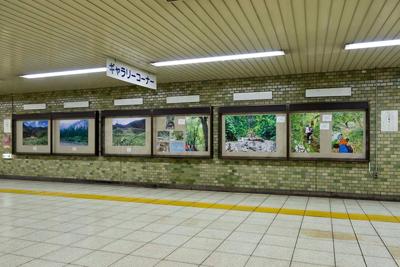 イラスト/写真展示@三田駅 第一弾「夏」